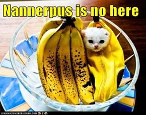 Nannerpus is no here