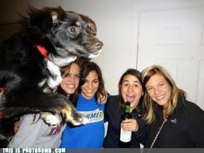 Photobomb Level: Dog