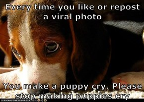 Every time you like or repost a viral photo  You make a puppy cry. Please stop making puppies cry