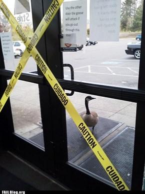 Goose Attack FAIL