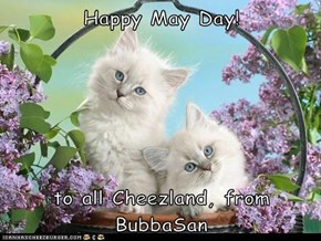 Happy May Day!  to all Cheezland, from BubbaSan