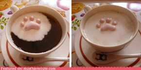 Epicute: Kitty Paw Marshmallows