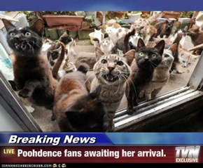 Breaking News - Poohdence fans awaiting her arrival.