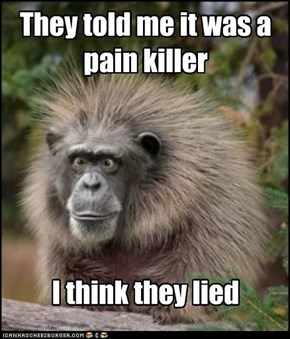 effed up monkey
