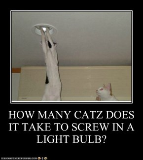 HOW MANY CATZ DOES IT TAKE TO SCREW IN A LIGHT BULB?