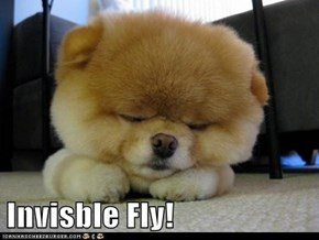 Invisble Fly!