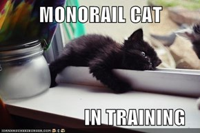 MONORAIL CAT                   IN TRAINING