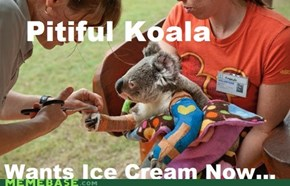 Pitiful Koala is pitiful