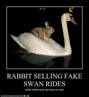 RABBIT SELLING FAKE SWAN RIDES