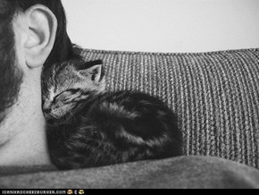 Cyoot Kitteh of teh Day: Neck Nook