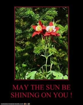 MAY THE SUN BE SHINING ON YOU !
