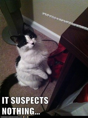 IT SUSPECTS NOTHING...