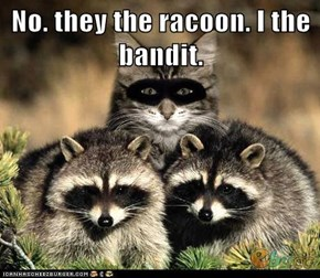 No. they the racoon. I the bandit.