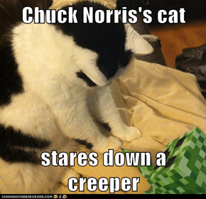 Chuck Norris's cat  stares down a creeper