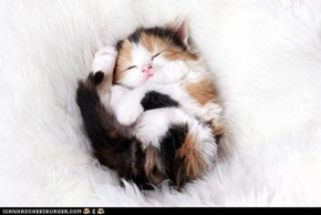 Cyoot Kitteh of teh Day: Fluffball