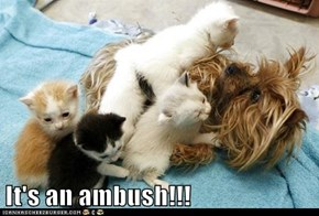 It's an ambush!!!
