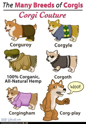 The Many Breeds of Corgis: Corgi Couture
