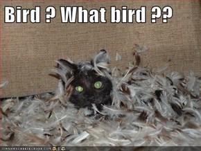 Bird ? What bird ??