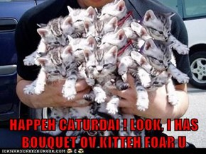 HAPPEH CATURDAI ! LOOK, I HAS BOUQUET OV KITTEH FOAR U