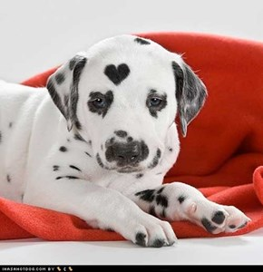 Cyoot Puppy ob teh Day: You got heart kid!