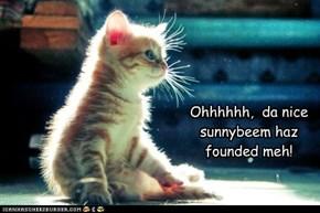 Ohhhhhh,  da nice  sunnybeem haz founded meh!