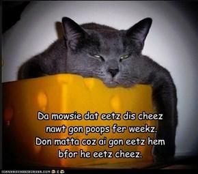 Da mowsie dat eetz dis cheez   nawt gon poops fer weekz. Don matta coz ai gon eetz hem bfor he eetz cheez.