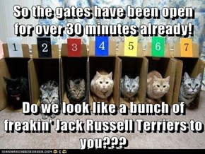 So the gates have been open for over 30 minutes already!  Do we look like a bunch of freakin' Jack Russell Terriers to you???