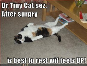 Dr Tiny Cat sez