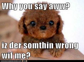 Why you say aww?  iz der somthin wrong wif me?