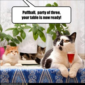Puffball,  party of three, your table is now ready!