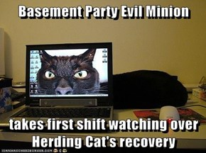 Basement Party Evil Minion  takes first shift watching over Herding Cat's recovery