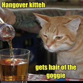 Hangover kitteh