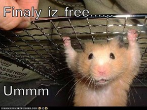Finaly iz free......  Ummm