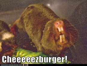 Cheeeeezburger!