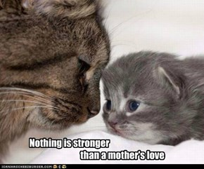 Nothing is stronger than a mother's love