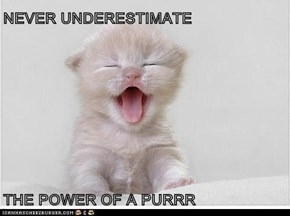 NEVER UNDERESTIMATE   THE POWER OF A PURRR