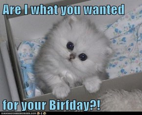 Are I what you wanted  for your Birfday?!