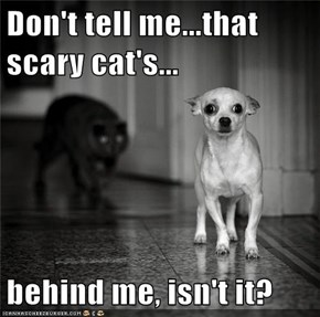 Don't tell me...that scary cat's...  behind me, isn't it?
