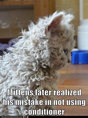 Mittens later realized his mistake in not using conditioner
