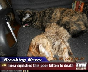 Breaking News - mora squishes this poor kitten to death