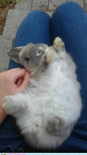 Reader Squees: Miracle Bun
