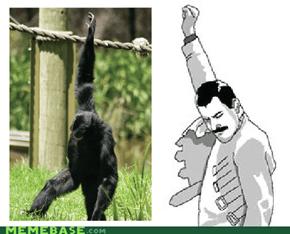Feddy Monkey