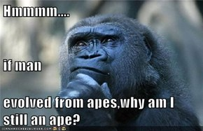 Hmmmm.... if man  evolved from apes,why am I still an ape?