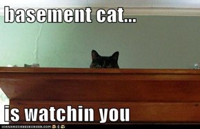 basement cat...  is watchin you