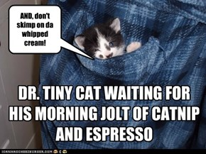 DR. TINY CAT WAITING FOR HIS MORNING JOLT OF CATNIP AND ESPRESSO