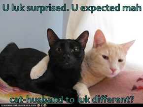 U luk surprised. U expected mah   cat-husband to luk different?