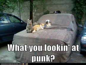 What you lookin' at punk?