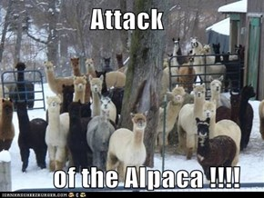 Attack           of the Alpaca !!!!