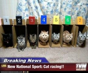 Breaking News - New National Sport: Cat racing!!