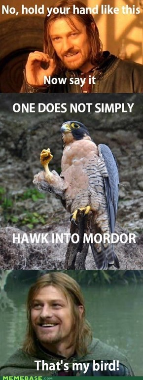 Hawk into Mordor